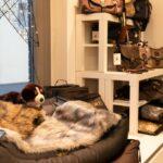 Hundefutter-Zuebehoer (8)