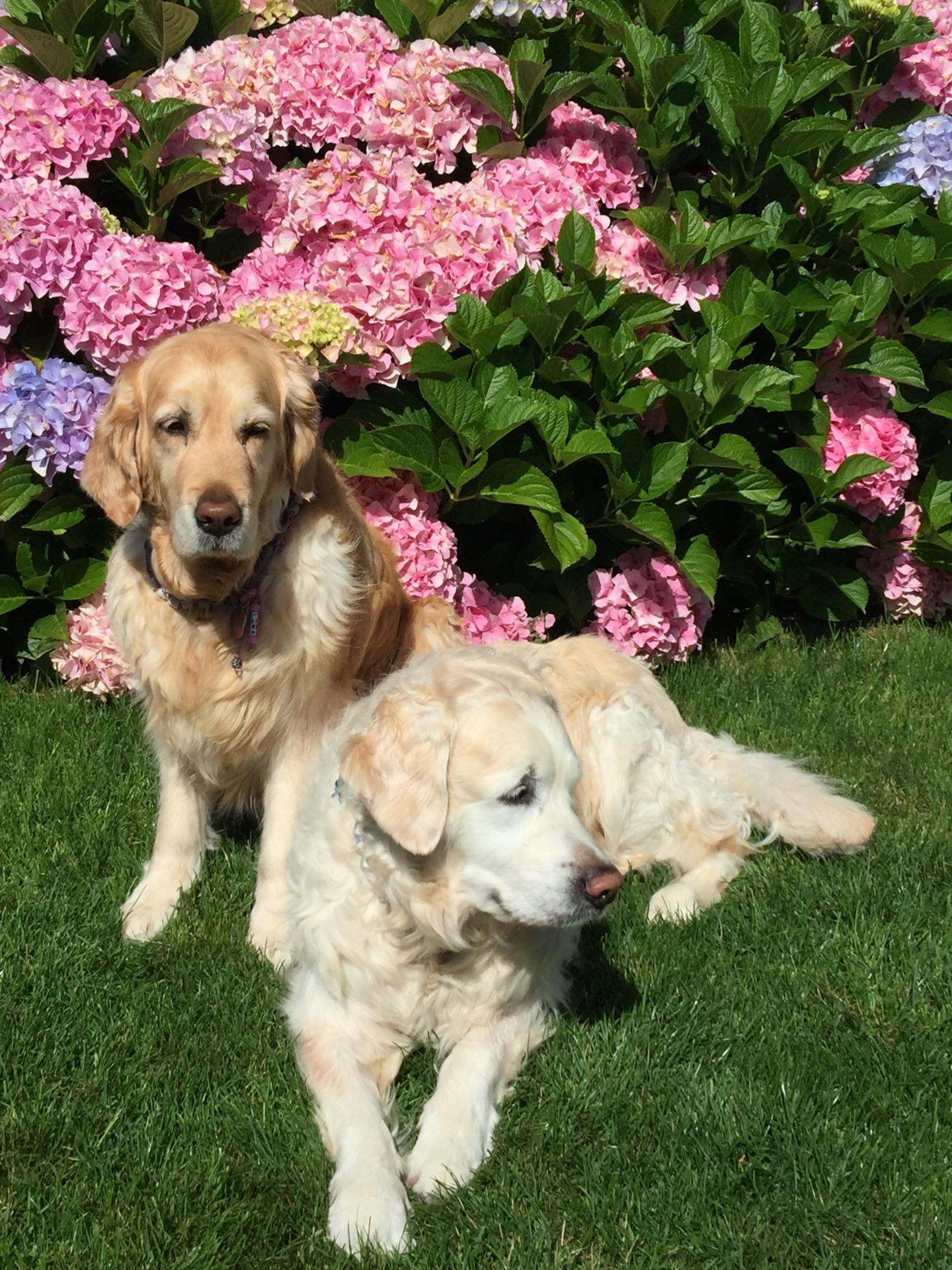Larissa mit Luna & Buddy